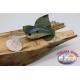 Artificiale Crank, 8cm-28gr. floating, col. ocra e blue, spinning. FC.V163