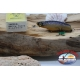 1 artificiale DUEL ZOMBI SHAD 7 CM 6,5 GR COL.RC LURES FLOATING MI71